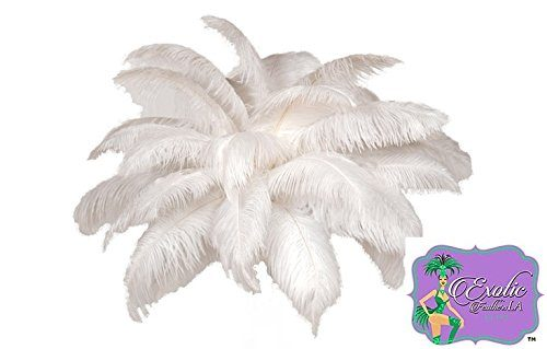 "White OSTRICH Feathers Wholesale Bulk SPECIAL SALE 12-16"" Long DELUXE Tail Feather Plumes White Qty 100 'The White Swan Collection' by ExoticFeathersLA"
