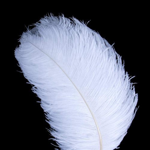 AWAYTR Natural 20-22 inch(50-55cm) Ostrich Feathers Plume for Wedding Centerpieces Home Decoration (10pcs, White-Large stem Feather)